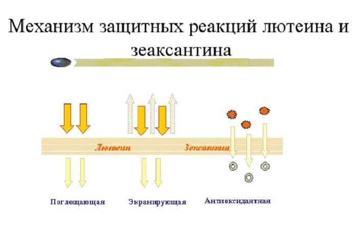Витаминный комплекс для глаз