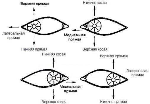 Диплопия при параличе отдельных мышц глаза