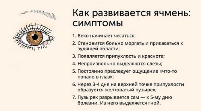 Этапы развития ячменя